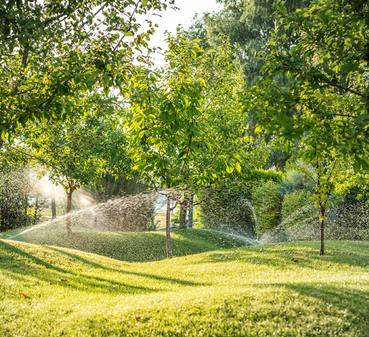 Lush green garden with trees with the sprinklers turned on