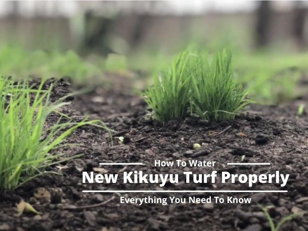 How To Water New Kikuyu Turf Properly _ Everything You Need To Know